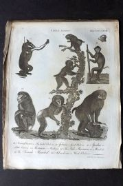 Encyclopaedia Britannica 1797 Antique Print. Simiae Baboons 468